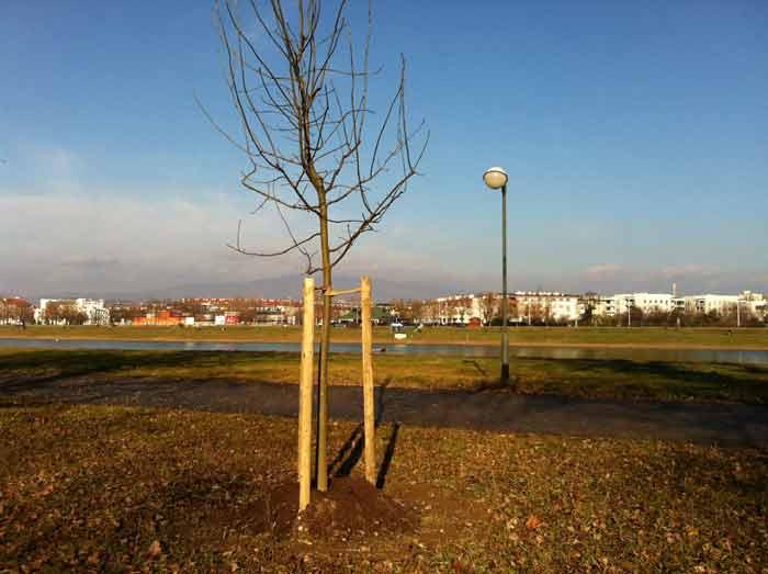 Moram vam pokazati: Novo stablo na Jarunu