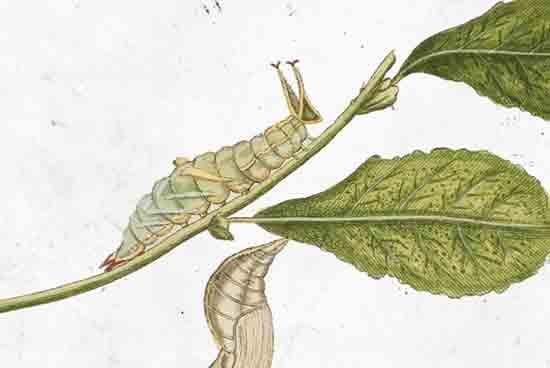 Izložba 'Metamorfoza: san proždrljive gusjenice…priča o leptirima' u Hrvatskom prirodoslovnom muzeju