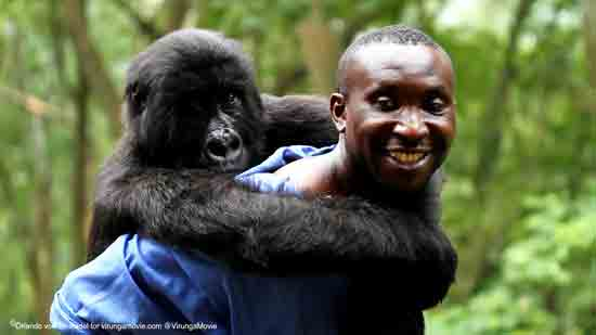 Virunga Andre With Gorilla Virunga National Park ; Ustupio ZagrebDox