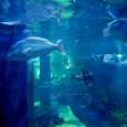 MODRI KAVEZ, dokumentarni film posvećen emotivnom životu pomoraca i njihovih obitelji, zbog neočekivano velikog interesa publike,produzuje svoje gostovanje u CINEPLEXXU SPLIT.  Modri kavez ; Ustupila BB  CINEPLEXX SPLIT produžio je gostovanje MODROG KAVEZ sa predviđenih 7 dana do kraja tjedna.  Sadržaj: Film o pomorcima koji su ostavili trag diljem svijeta. Cilj Modrog kaveza je odati počast i iznijeti zanimljive [...]