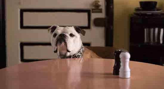 Za razliku od divljeg psa u 'Mad Maxu 2' kojeg Mel Gibson zove samo Pas (>LINK) ili psa Johna Wicka u drugom nastavku (>LINK) kojeg Keanu Reeves kaže da nema imena, Pas u Jarmuschevom filmu Paterson, ne samo da ima ime (koje može imati i čovjek, čak i glazbena zvijezda), već je i dobio priznanje [...]